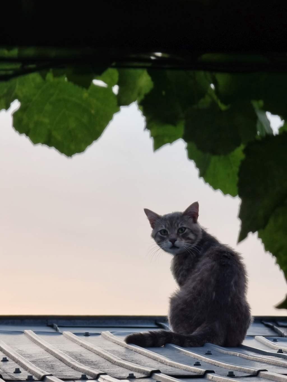 s21 pisica